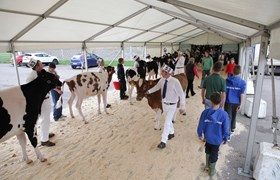 Cattle Show - Avon Hall Link Marquee - Three Counties Showground.jpg