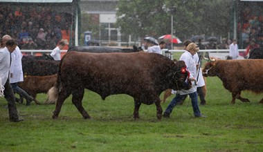 Royal Three Counties Show - Grand Parade in the Rain.jpg